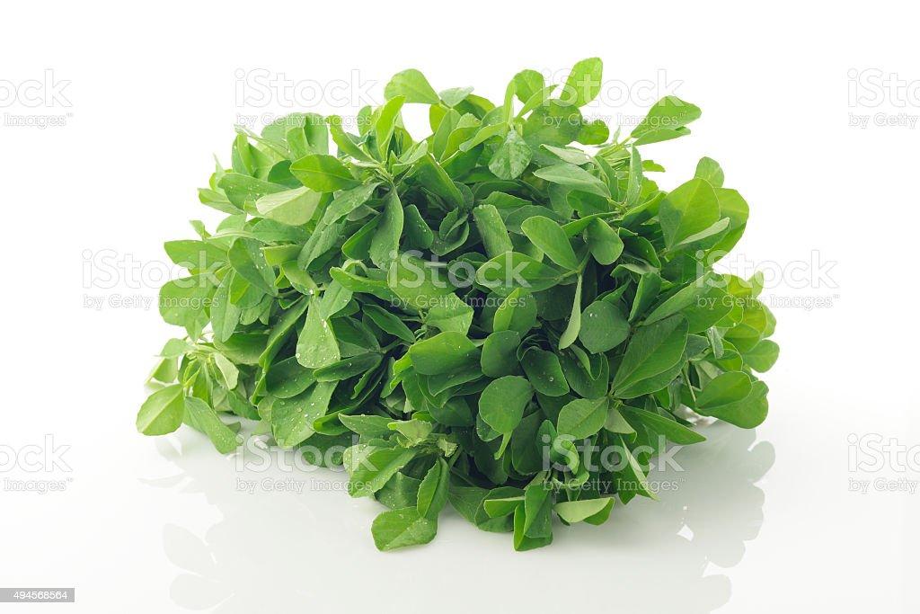 Fresh Green Fenugreek Leaves on White Background stock photo
