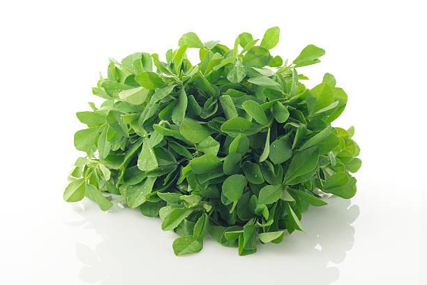 vert frais de fenugrec feuilles sur fond blanc - fenugrec photos et images de collection
