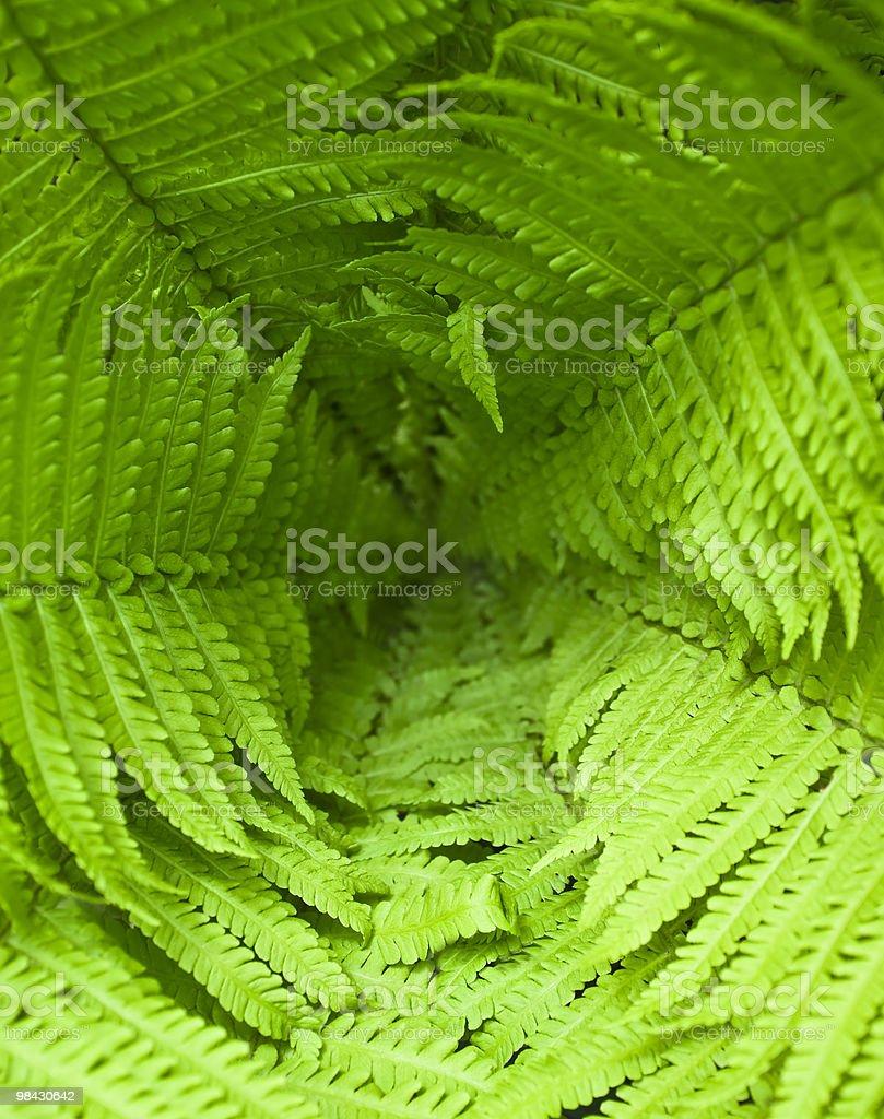 fresh green fern leafs royalty-free stock photo