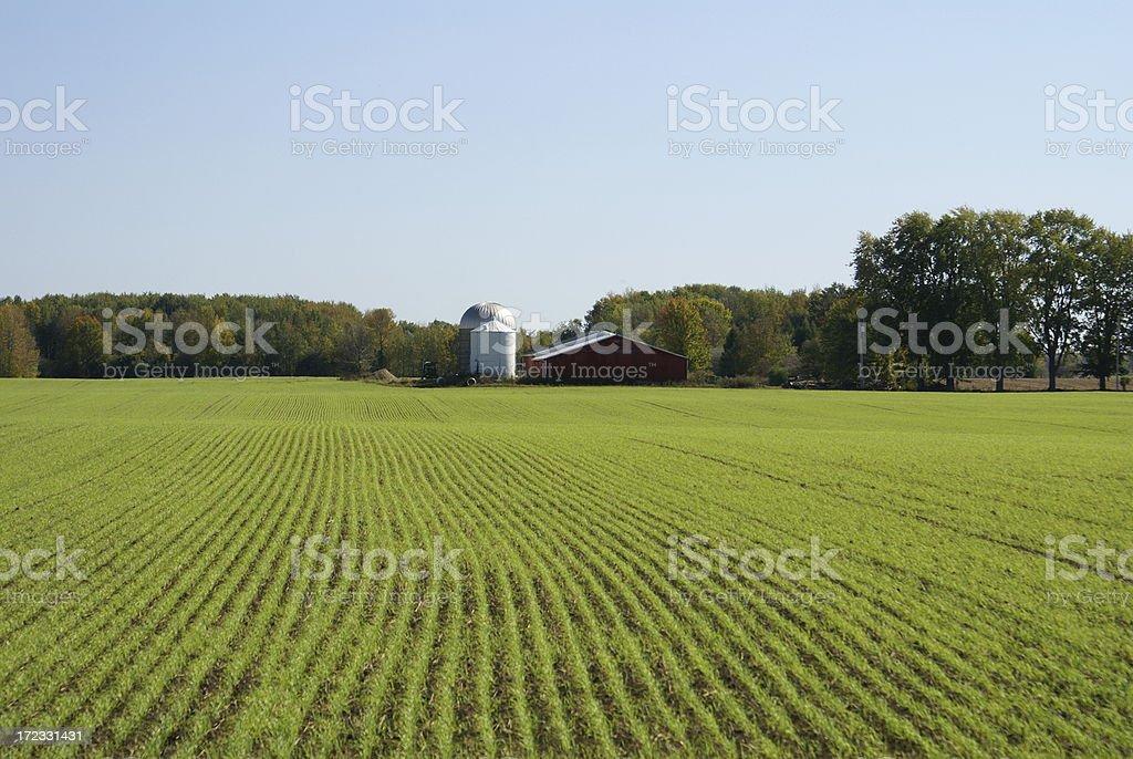 Fresh Green Field stock photo