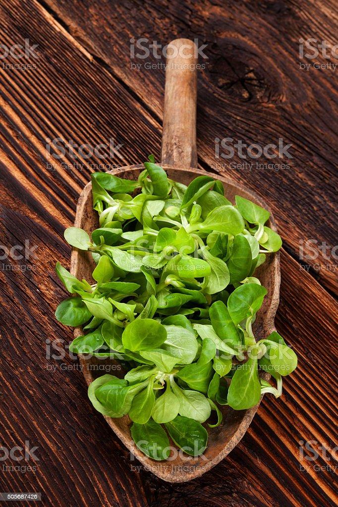 Fresh green field salad. stock photo