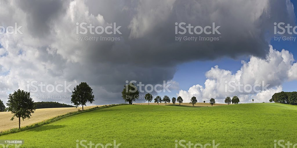 Fresh Green Field with Trees under Beautifull Clouds stock photo