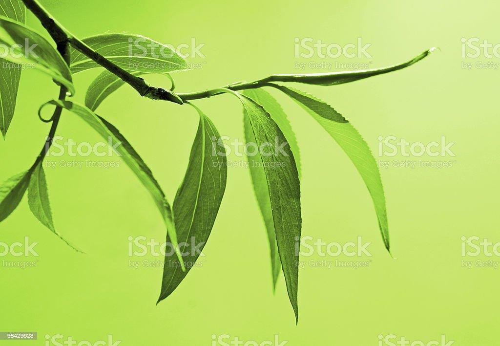fresh green foliage royalty-free stock photo