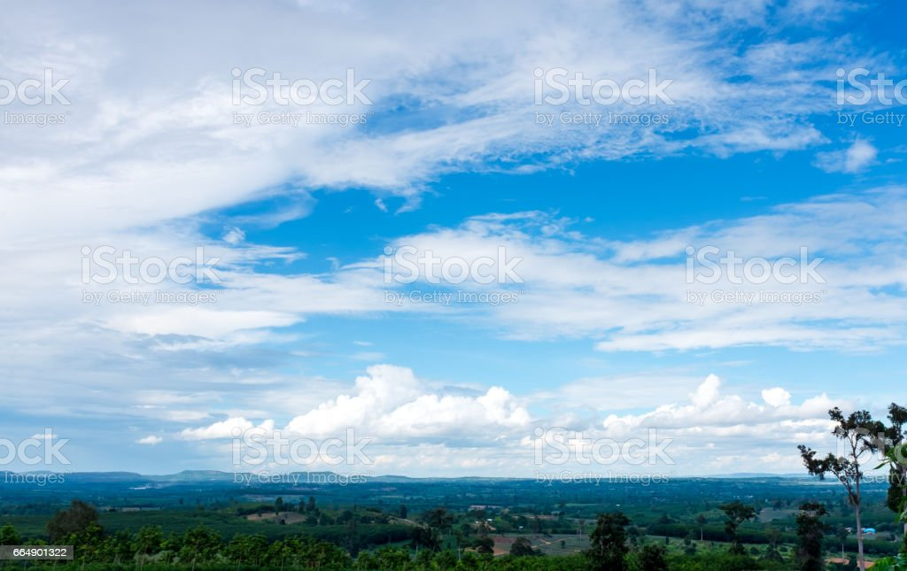 Fresh green forest nature against blue sky and cloudy. foto stock royalty-free
