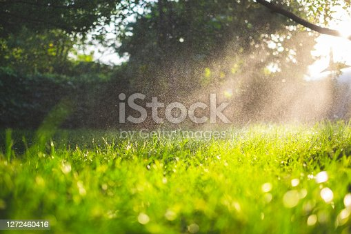 Fresh green grass and water drops over it sparkling in sunlight