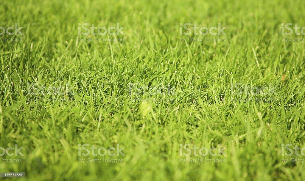 Fresh green grass background royalty-free stock photo