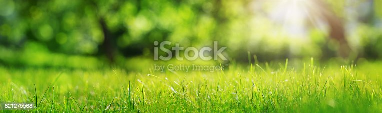 istock Fresh green grass background 821275568