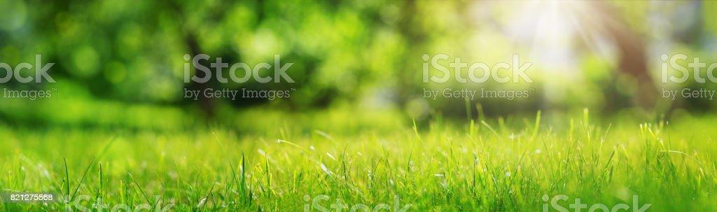 Fresh green grass background stock photo