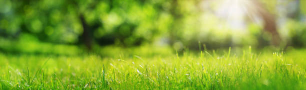 Fresh green grass background stock photo