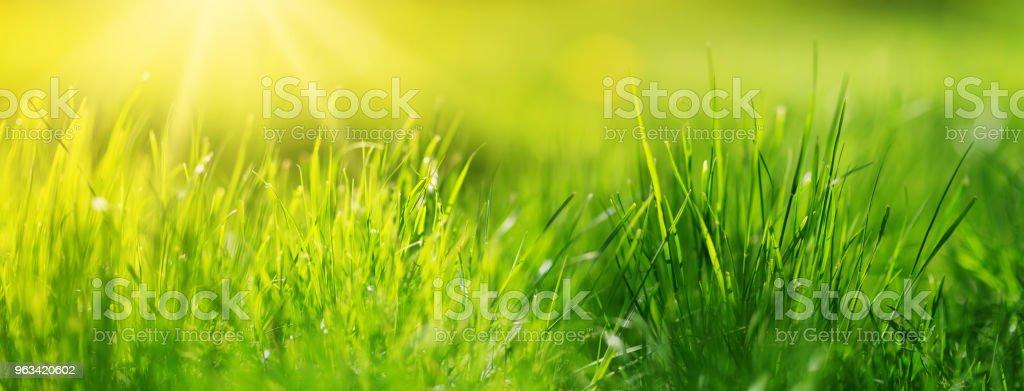 Świeże zielone tło trawiaste - Zbiór zdjęć royalty-free (Bez ludzi)
