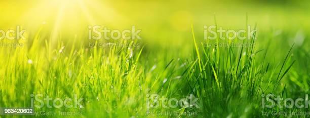 Świeże Zielone Tło Trawiaste - zdjęcia stockowe i więcej obrazów Bez ludzi