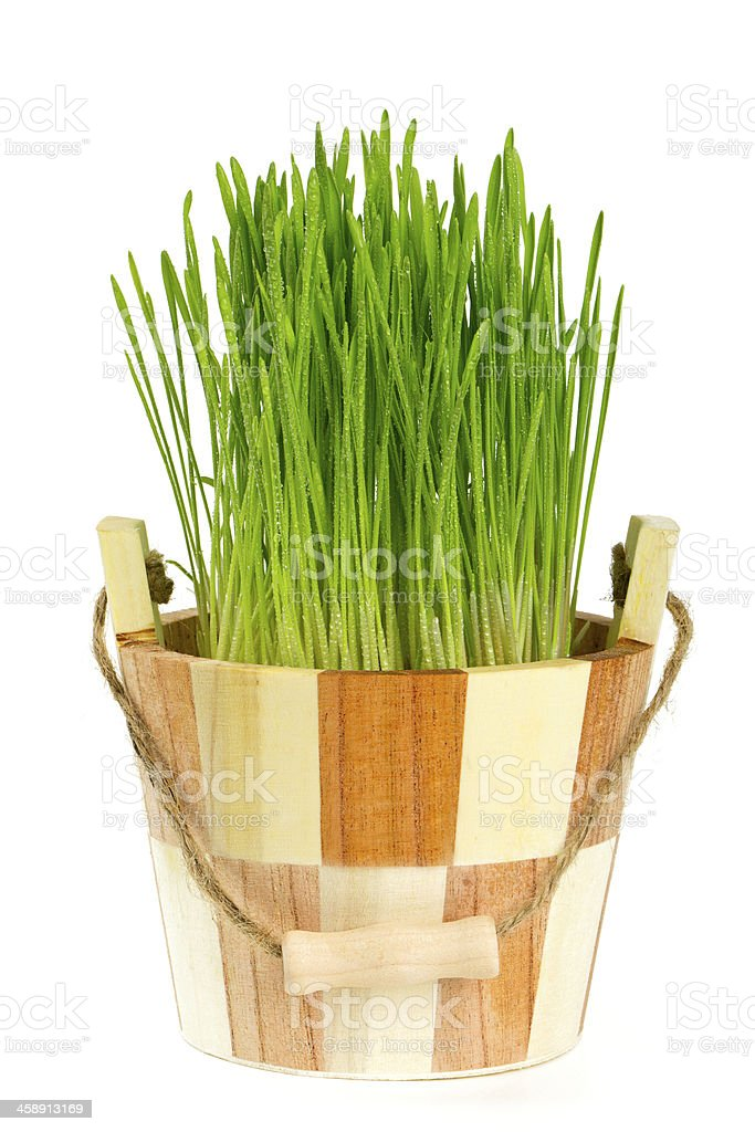 fresh green grass in a sauna bucket royalty-free stock photo