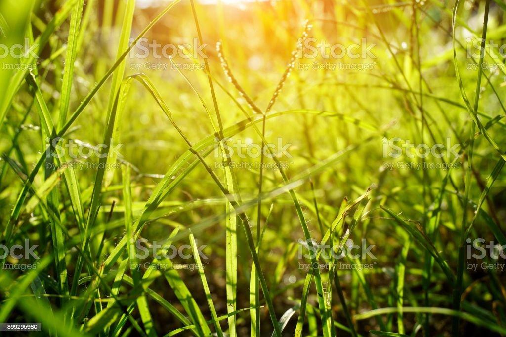 hierba verde fresca en el jardín de la naturaleza - foto de stock