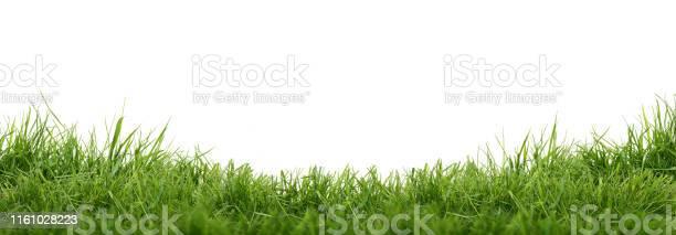 Photo of Fresh green grass