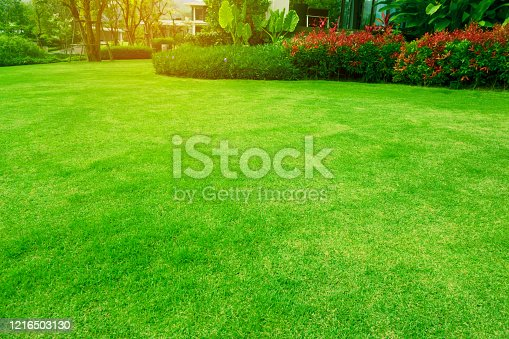 Fresh green grass smooth lawn with curve shape of bush under morning sunlight