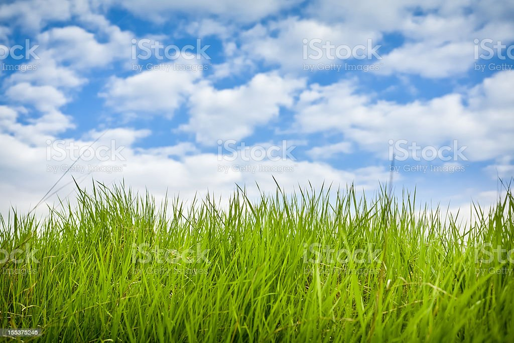 Fresh green grass with blue sky royalty-free stock photo