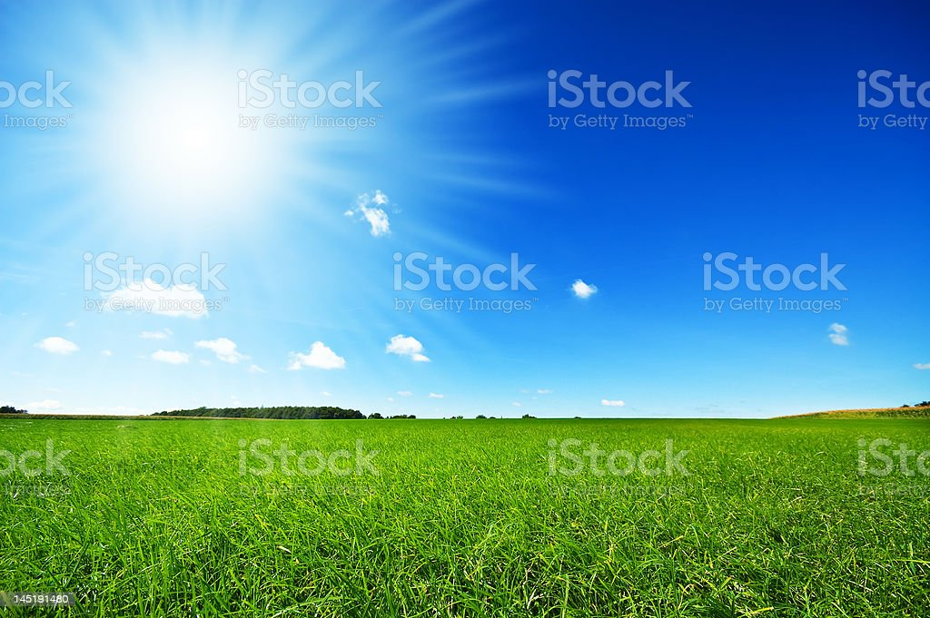 fresh green grass with bright blue sky royalty-free stock photo