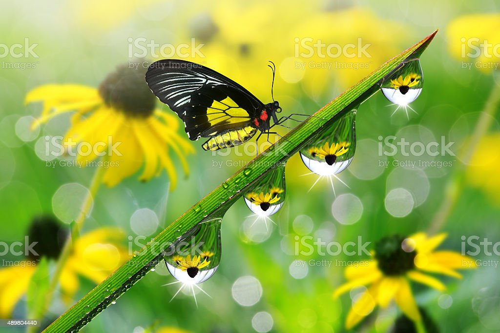 Fresh green grass with dew drops and butterfly closeup stock photo