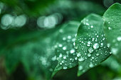 istock Fresh green grass with dew drops closeup. Nature Background 611746924