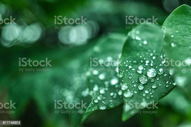 Photo of Fresh green grass with dew drops closeup. Nature Background