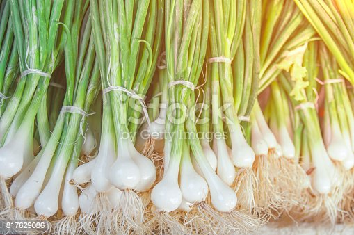 istock Fresh green healthy bio leek on farmer agricultural market on morning sunny day 817629086
