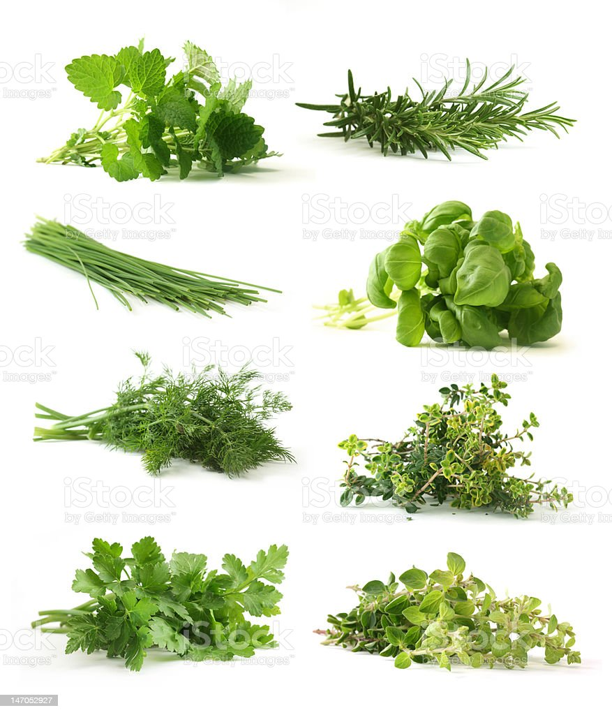 Fresh green herbs isolated on white with drop shadows stock photo