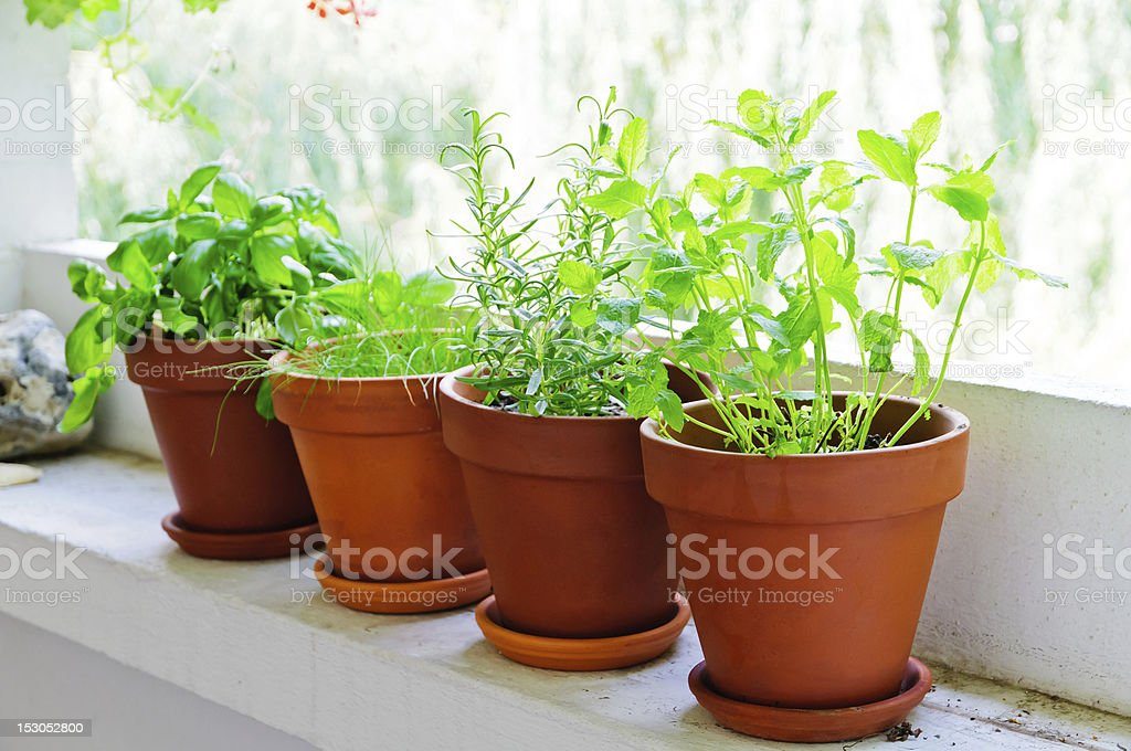 fresh green herbs royalty-free stock photo
