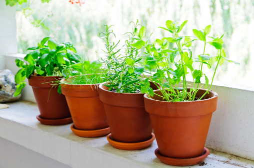 Fresh Green Herbs Stock Photo - Download Image Now