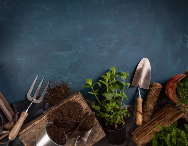 Fresh green herbs with garden tools stock photo