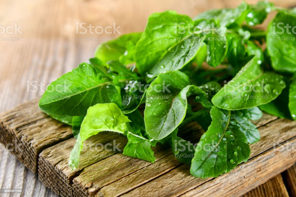 Fresh green home arugula leaves, rucola. Salad. stock photo