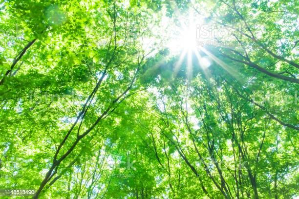Fresh green in forest picture id1148513490?b=1&k=6&m=1148513490&s=612x612&h=o0loenobiwqv5qpzj06 3tsplnkjjrjijop7zchrugg=