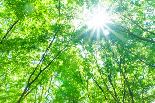 森林中的新鮮綠色 - 恢復精神 個照片及圖片檔