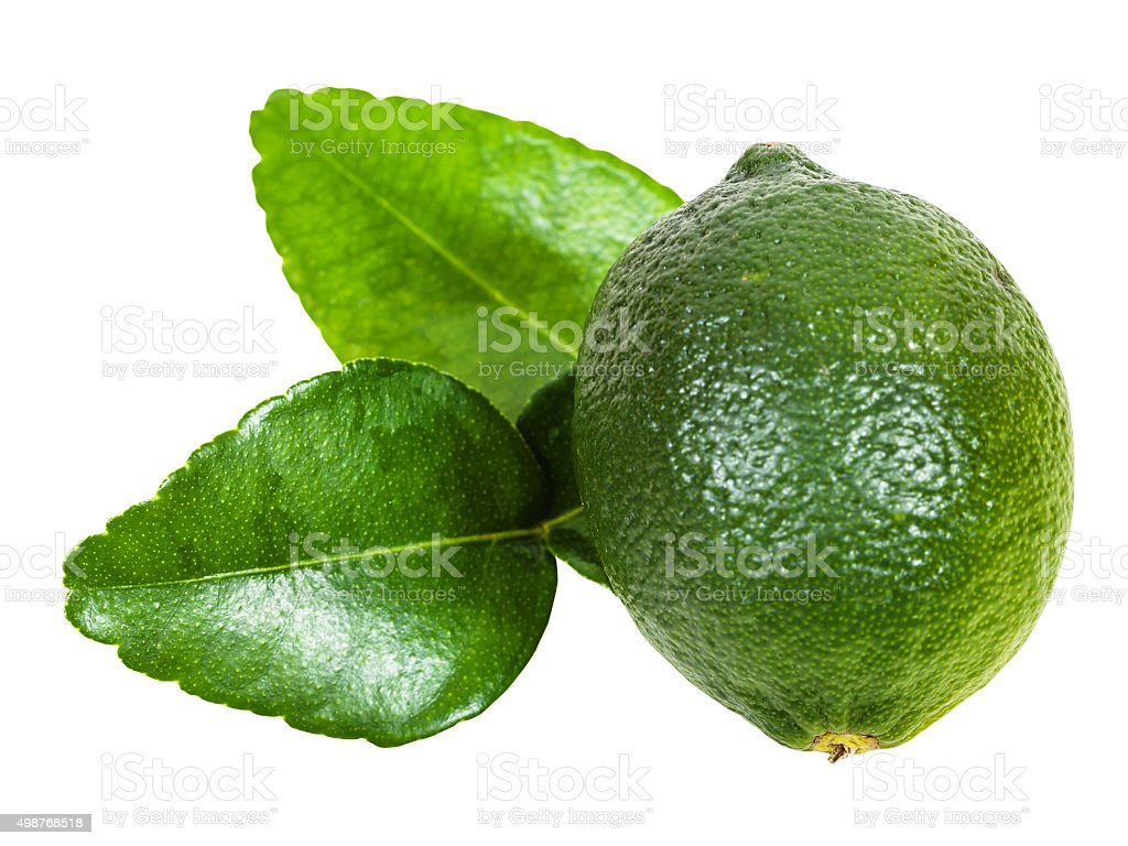 fresh green kaffir lime fruit with leaves isolated stock photo