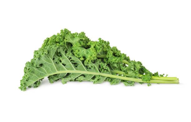 fresh green kale leaves stock photo