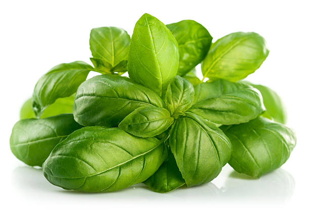 fresh green leaf basil - basil stock photos and pictures