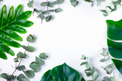 Taze Yaprak Yeşil Stok Fotoğraflar & Ağaç'nin Daha Fazla Resimleri