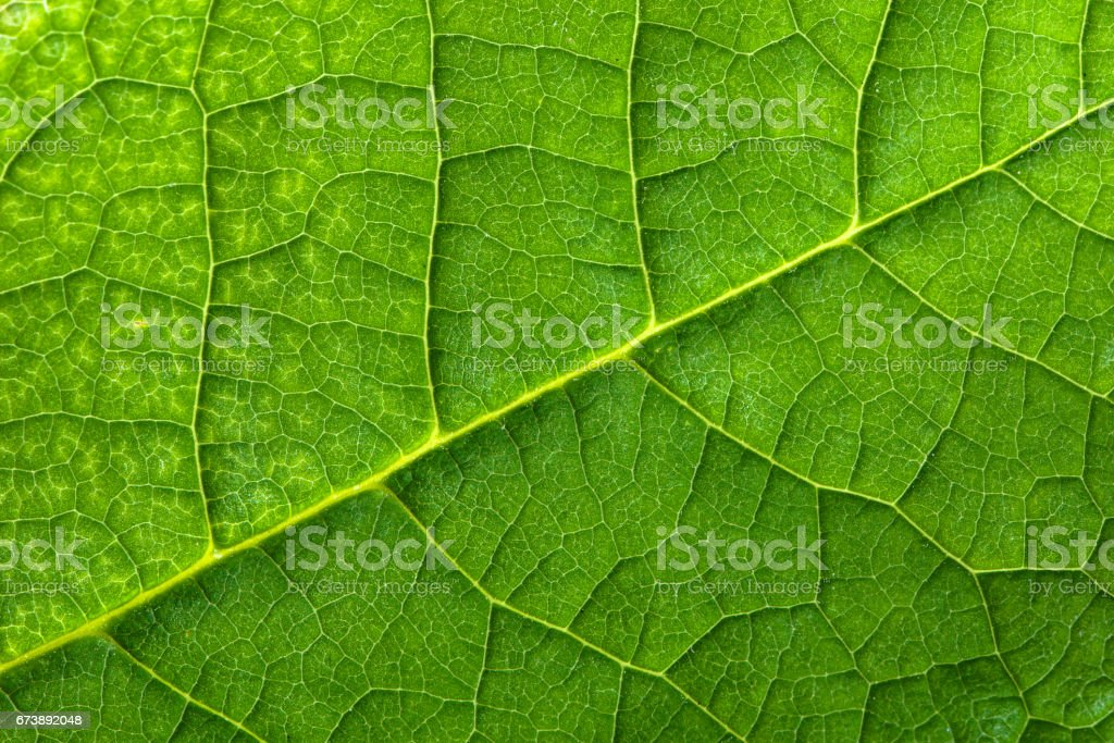 Fresh green leaf texture, leaf macro background photo libre de droits