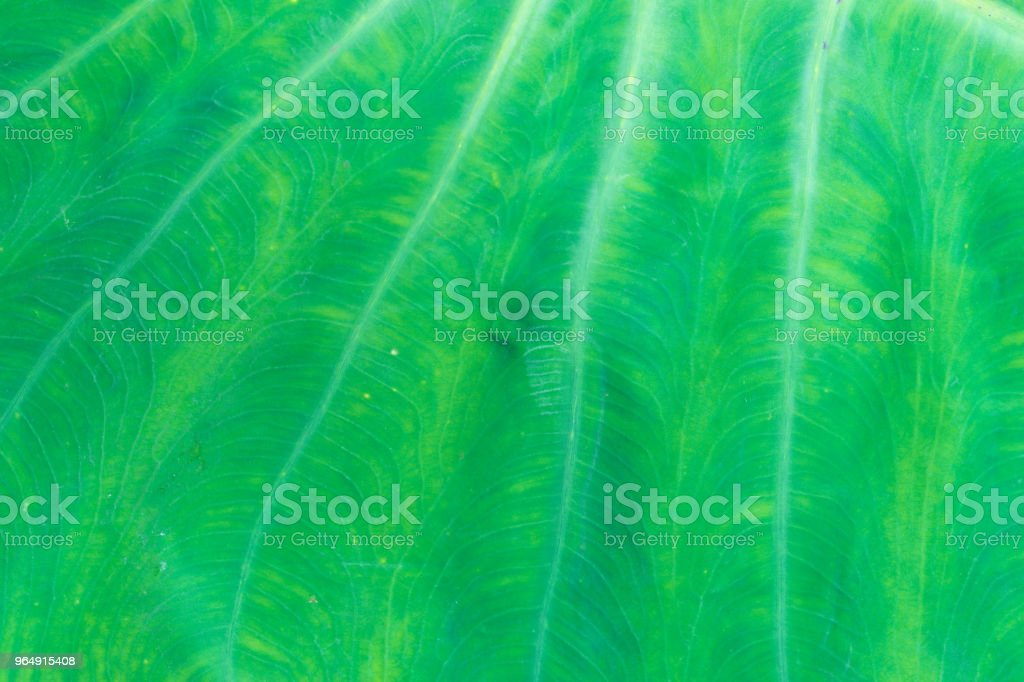 fresh green leaf texture macro close up royalty-free stock photo