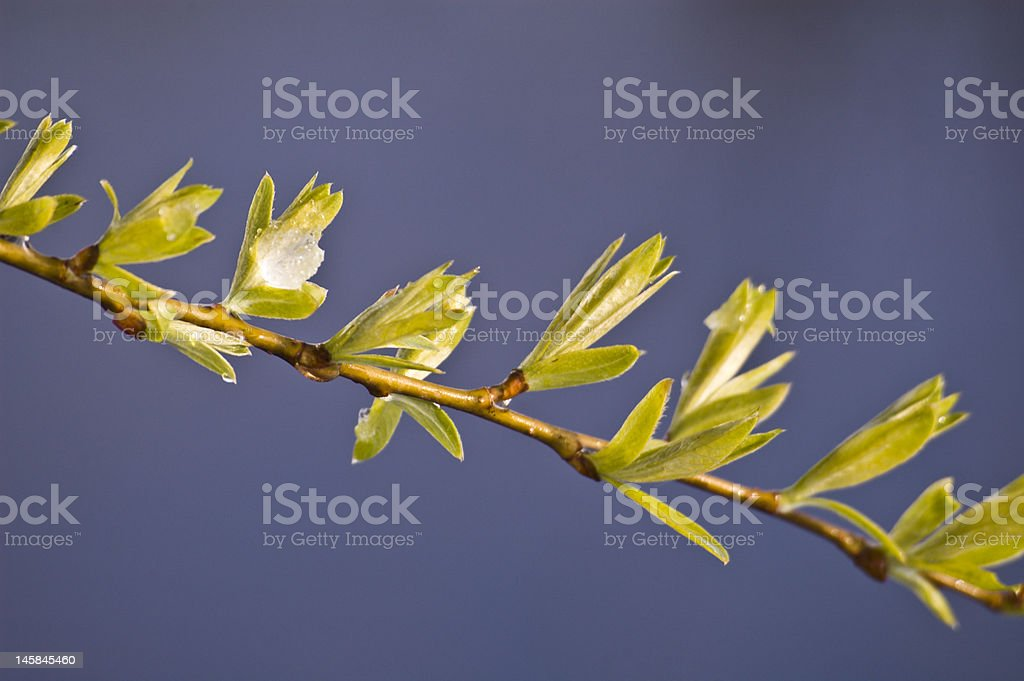 fresh green leafs stock photo