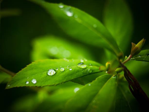 新鮮な緑の葉と背景 - sustainability ストックフォトと画像