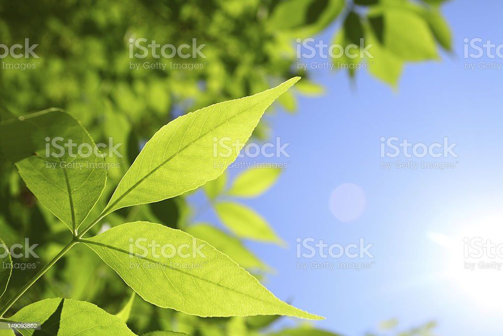 fresh green leaves and natural sun rays stock photo