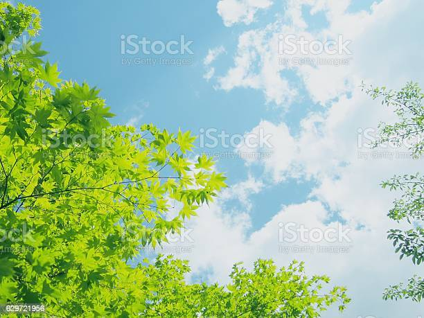 Photo of Fresh Green Leaves and sky