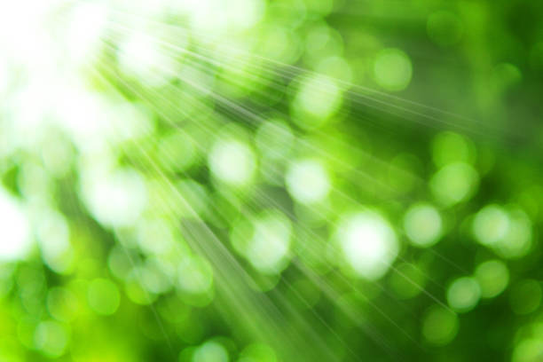 Fresh green leaves and sunshine Fresh green leaves and sunshine sustainable energy stock pictures, royalty-free photos & images