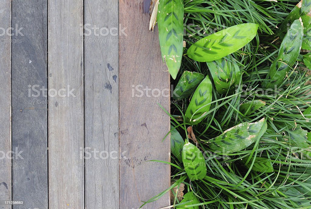 Fresh green leaves  and  Wood background royalty-free stock photo