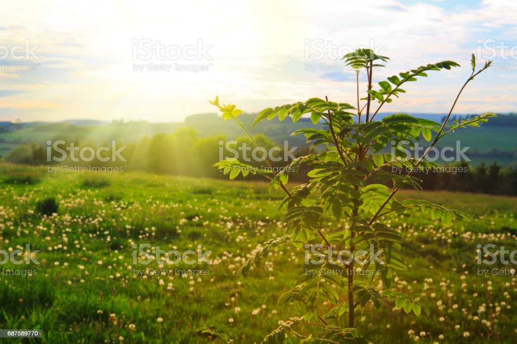 Fresh green leaves framing the sun Sun rays shining through leaves ,nature background. Spring background. Backgrounds Stock Photo