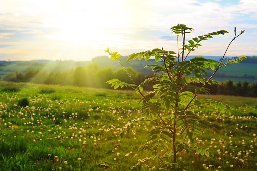 Fresh Green Leaves Framing The Sun Stock Photo - Download Image Now