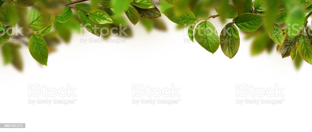 Fresh green leaves header royalty-free 스톡 사진