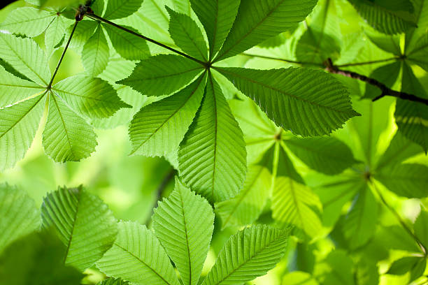 Fresh green leaves in forest stock photo