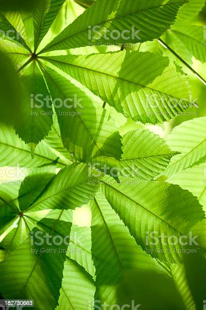 Fresh green leaves in forest picture id182730663?b=1&k=6&m=182730663&s=612x612&h=pndcmcfo5hvgcknuidjlg3m1xhvwoo29taqvubdysf8=