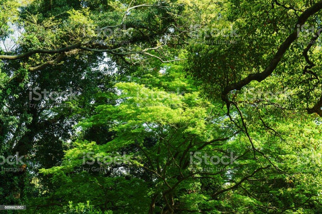新緑の森で ストックフォト